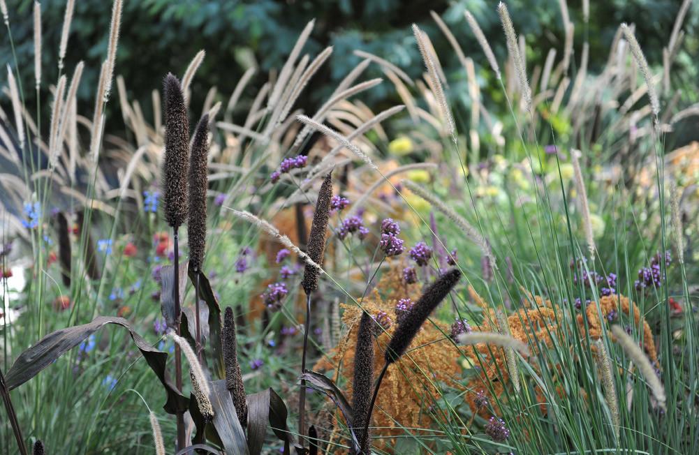 Сад в природному стилі — 25 фото для натхнення
