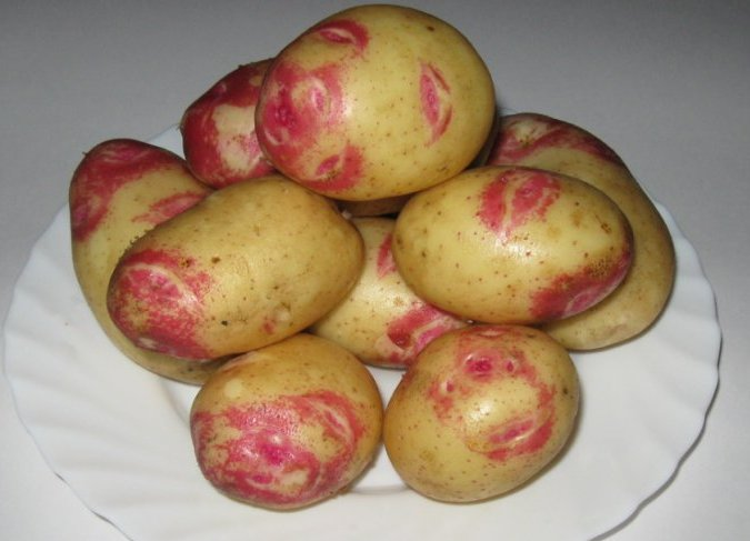 Картопля «Пікассо» (Picasso)
