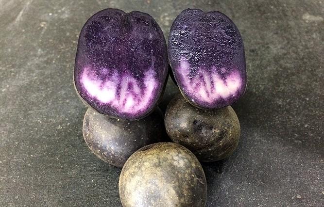 Картопля «Солоха»