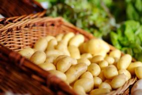 10 найкращих сортів картоплі — рейтинг читачів Зеленої садиби