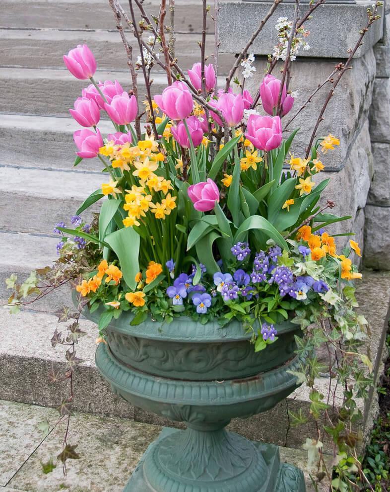 Підсаджуєте до них примули, віолу, очитки, обрієту... (та будь-що з сезонного асортименту!) І маєте цікаву композицію, якою можна прикрасити передній план квітника чи вхід до будинку