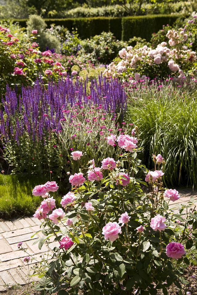 Трояндовий сад (The Rose Garden) в Сісінгхерсті