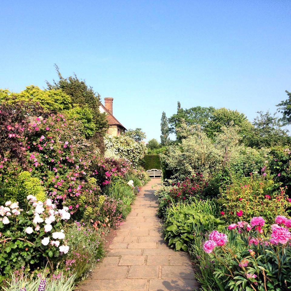Той самий вид, тільки літній пейзаж: зліва видно дугу ліщини, до якої кріпляться гілки всипаної квітами троянди