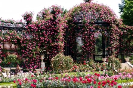 Розарій Валь-де-Марн у Франції — найбільша колекція старовинних троянд у світі
