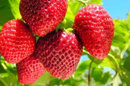 10 кроків до великого врожаю полуниці