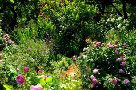 Сад родини Микитинець з Мелітополя і його колекція старовинних троянд