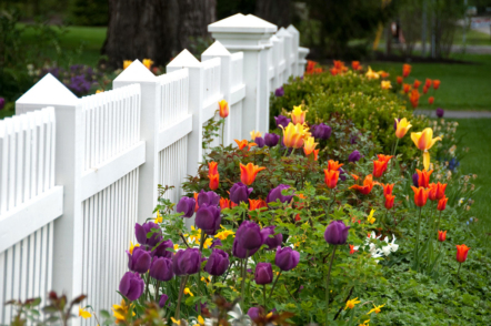 Весняний сад — 70 фото для натхнення