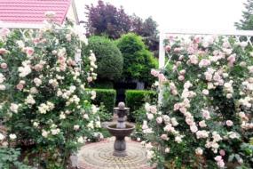 Сад родини Швець з Закарпаття — розарій в регулярному стилі