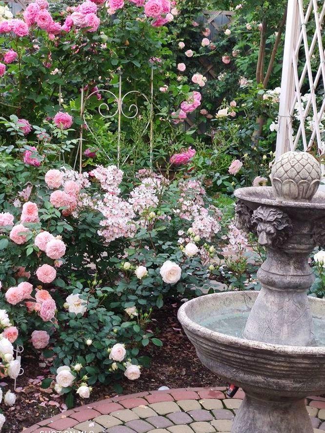 Довкола фонтана висаджені троянди, ретельно відібрані за характеристиками і вподобаннями хазяйки Світлани