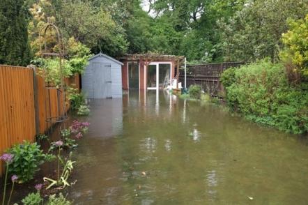 Як допомогти рослинам пережити потоп?