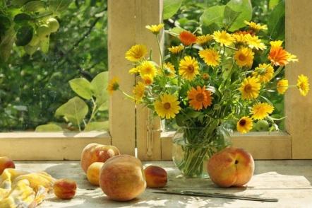 5 причин вирощувати нагідки, або календулу