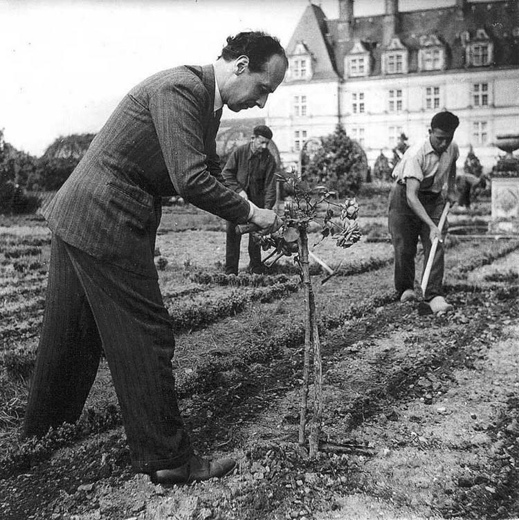 Іоахим Карвалло підрізає одну з троянд в саду