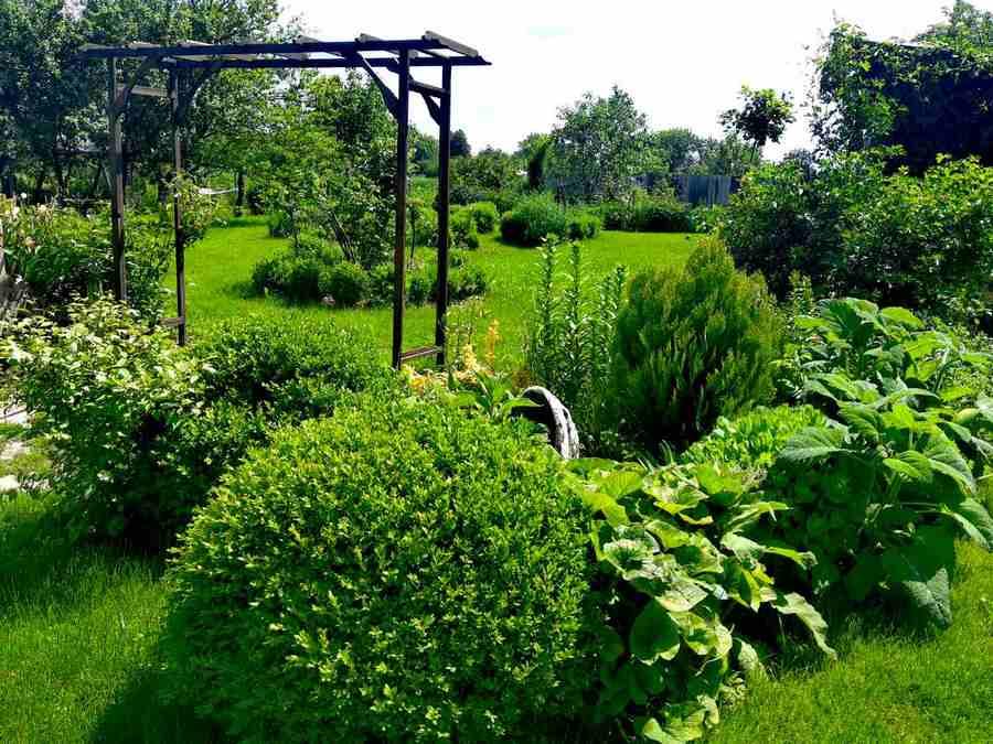 Вигляд на центральну частину саду. Всі перголи, шпалери, лави, підпірні стінки – та все абсолютно, навіть грядки, робить господар садиби – Тарас Кононенко