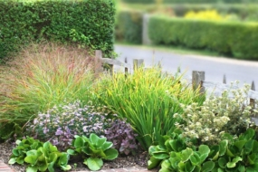 20 надійних комбінацій для квітників з 5-ти багаторічників