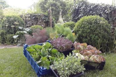 """Сад потаже забезпечує ресторан """"Потаже"""" овочами та фруктами – з грядки на стіл"""