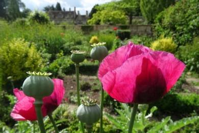 «З першим врожаєм салату зацвітають тюльпани, а маку і мальві дозволяється насіватися, де вони того захочуть», - садівник Барнслі сьогодні