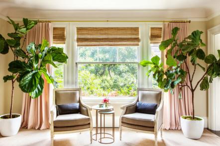 Великі кімнатні рослини в інтер'єрі – 40 ідей з фото