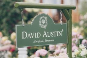 Правила вирощування англійських троянд — поради від Девід Остін Роузес
