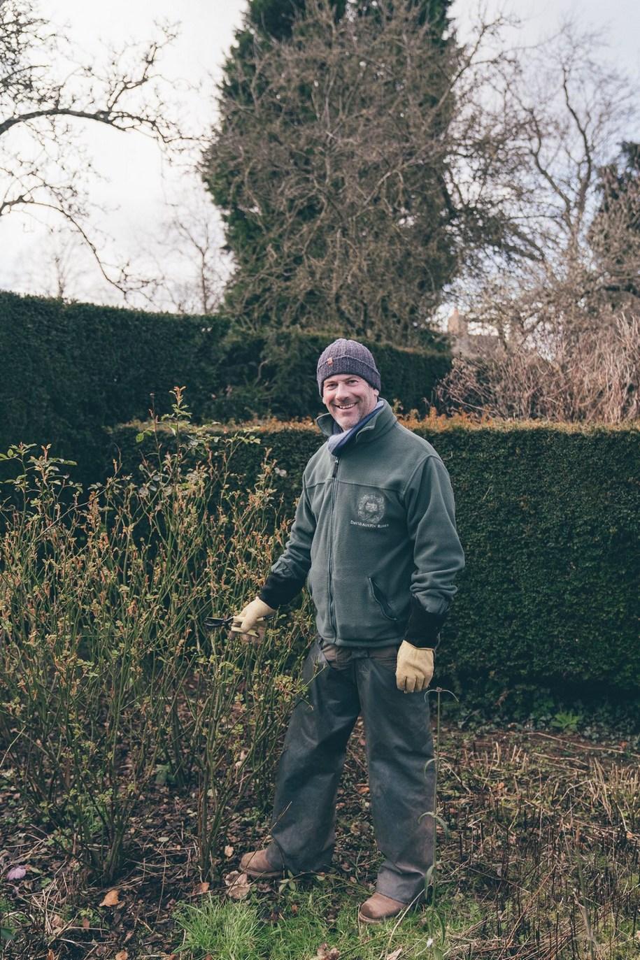 Весняне обрізування троянд проводиться до початку вегетації: кінець лютого-березень, в залежності від погоди.