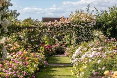 Плетисті троянди, як ніякі інші, здатні створити неймовірного вигляду вертикалі у вашому саду