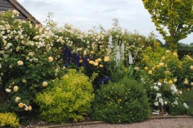 Розбийте середину квітника високими квітучими однорічними або багаторічними рослинами, такими як наперстянка, декоративна цибуля, коровяк та дельфініуми