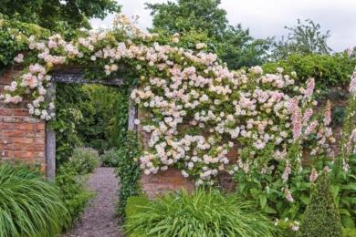 Змішайте світло-і середньо-рожевий колір у квітнику для романтичного ефекту. Пам'ятайте, прості білі квіти, поєднані із зеленим листям, створюють безтурботне відчуття