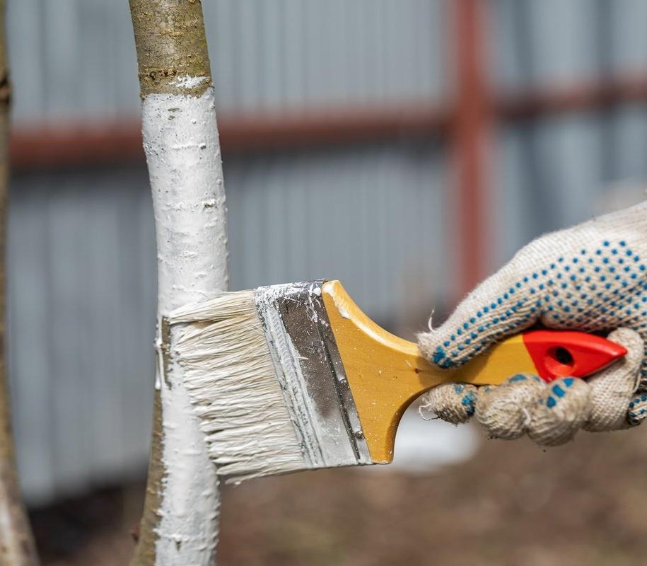Для побілки дерев на зиму краще обирати спеціальні засоби