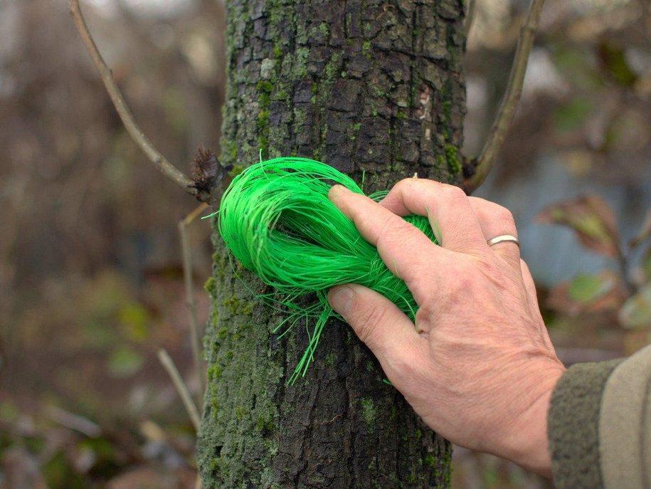 Ретельна чистка кори від лишайників, моху, відшарувань дозволяє оздоровити кору й стимулювати її здоровий розвиток