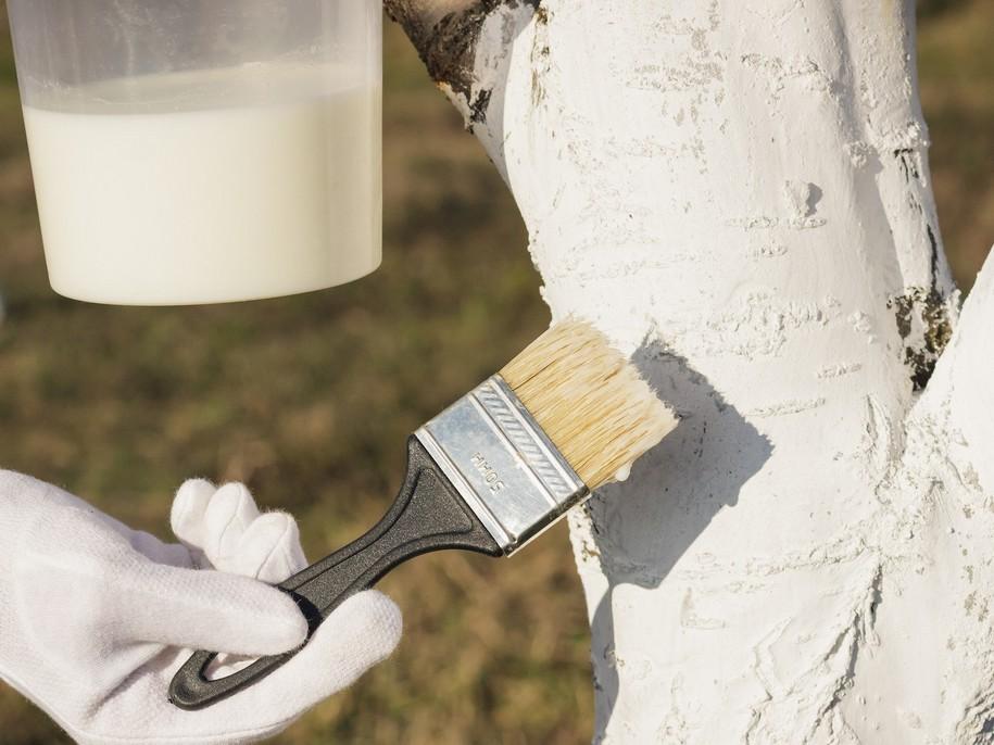 Білити дерева можна спеціальною мочальною щіткою або великим пензлем