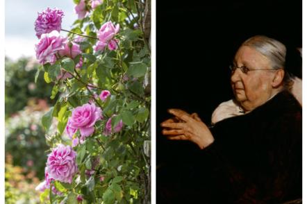 Гертруда Джекіл — особистість, ландшафтна дизайнерка, троянда