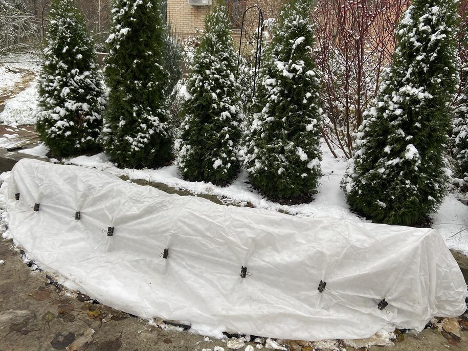 Як укривати троянди на зиму — поетапна інструкція