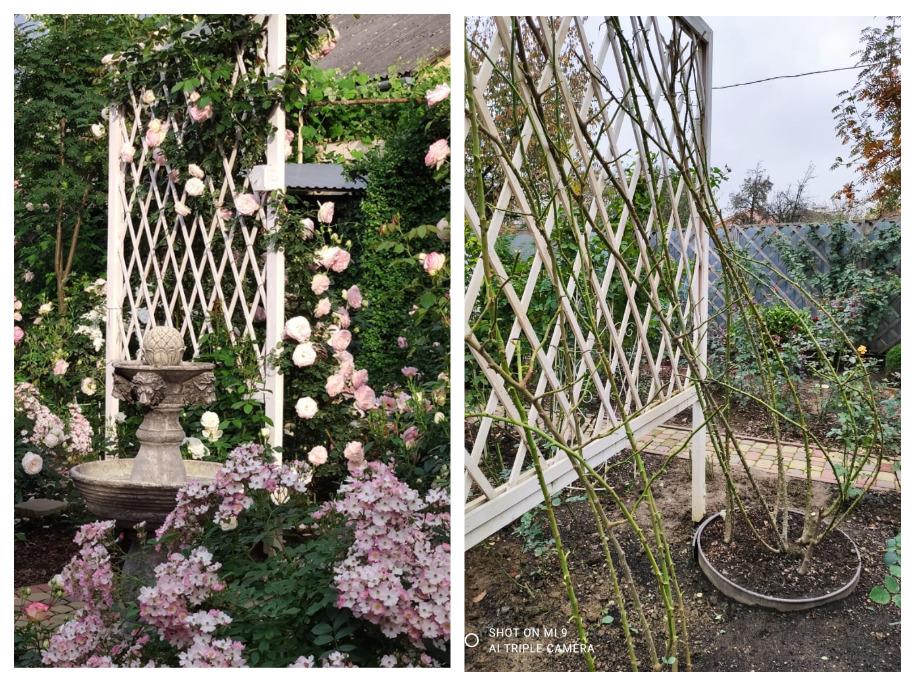 Сад родини Швець в Закарпатті
