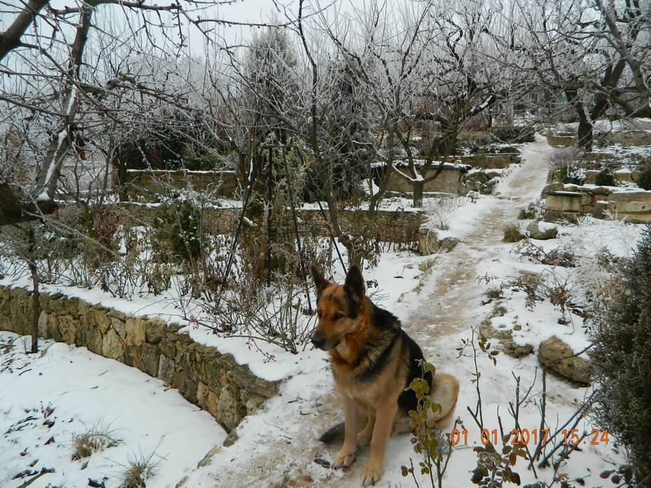 Каскадний південний сад родини Микитинець взимку