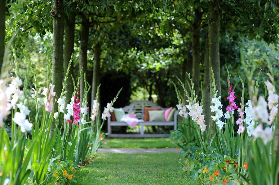 Гладіолуси в дизайні саду