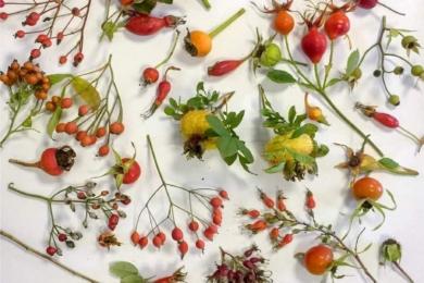 У ДО Роузес є фантастичний вибір троянд, які дають плоди-шипшини з кінця літа аж до зими. Декоративні зовні вони світяться в червоних та помаранчевих відтінках, додають кольори, коли в саду осідає зима. Вони також слугують цінним джерелом їжі зимою для садових птахів