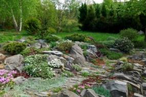 Як підібрати рослини для альпійської гірки чи іншого кам'янистого саду?