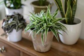 Ідеальні кімнатні рослини для новачків