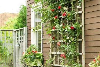 Рослини по будинку