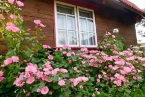 Які однорічні квіти можна посіяти весною одразу в грунт?