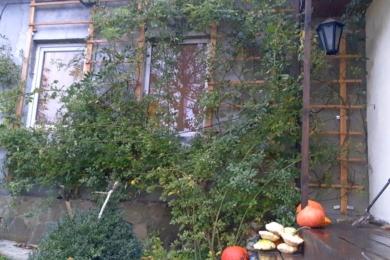 Троянда «Дороті Перкінс» восени