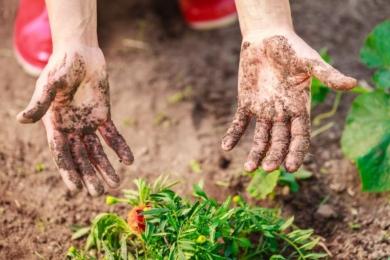 Експрес-методи по догляду за руками — поради садівника