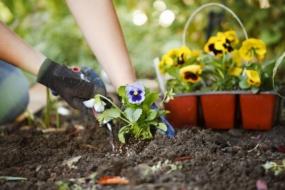 Посівний календар на травень 2021 городника і садівника