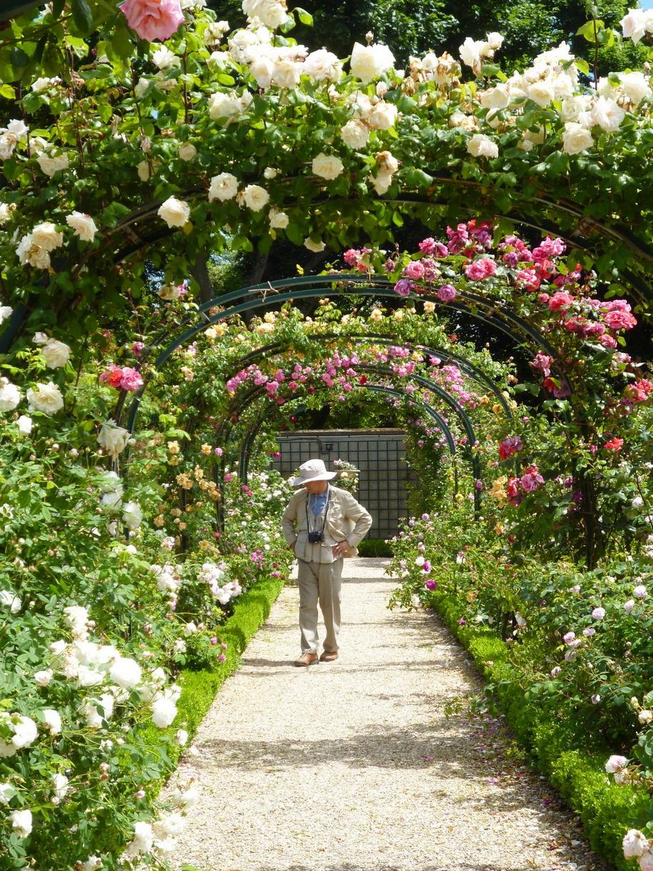 «Сад Мальмезон» в розарії Валь-де-Марн, де відтворена майже вся колекція Жозефіни