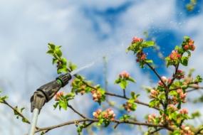 Весняний догляд за плодовими деревами