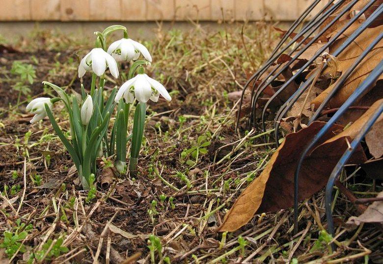 Весною варто повністю прибрати територію під плодовим садом