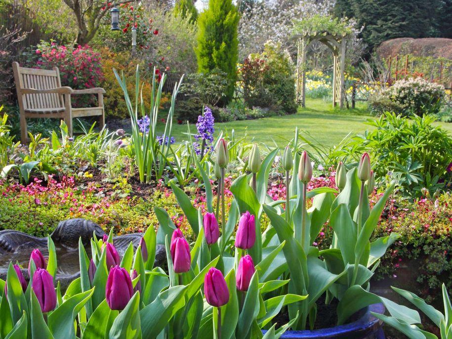 Як зробити яскравим весняний квітник?