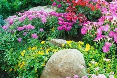 Квітник на подвір'ї для створення яскравих акцентів