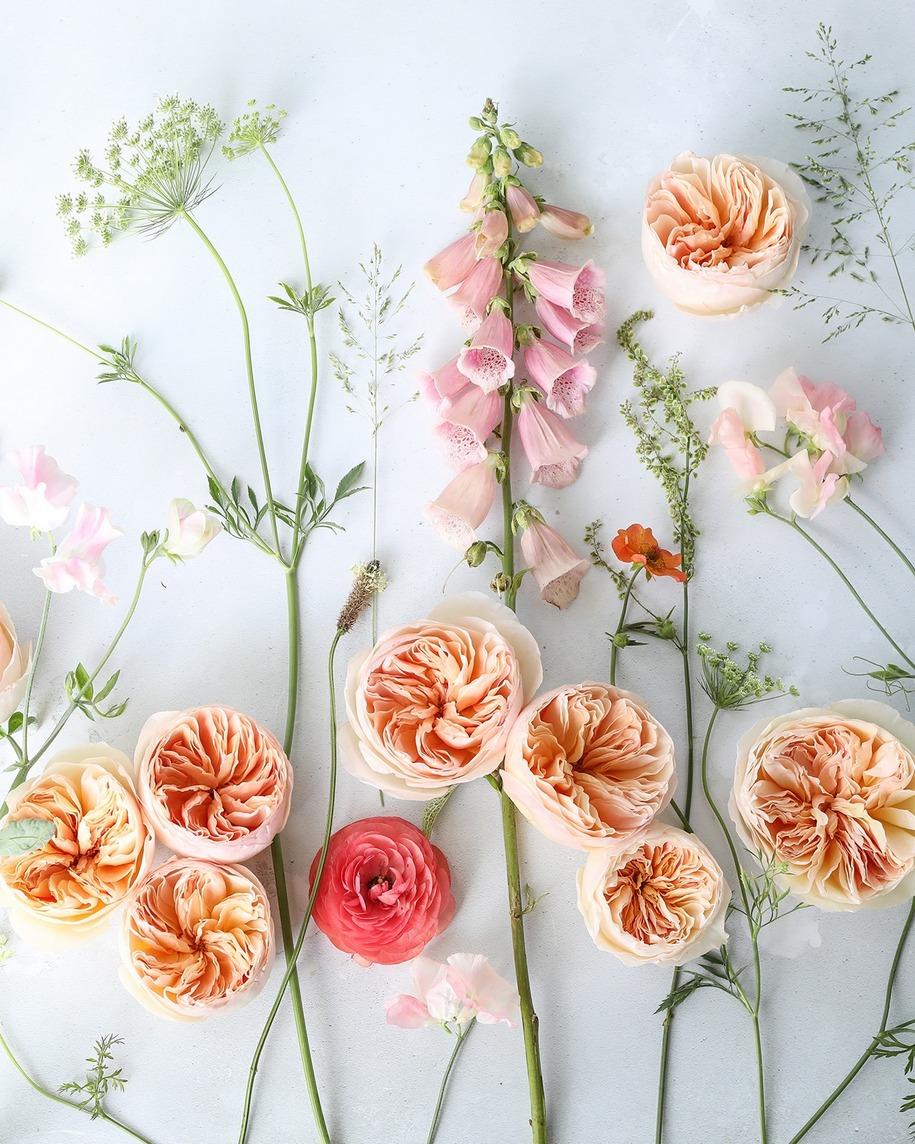 Сорт може мати унікальну красу і харизму, наприклад, «Джульєтта», але при цьому бути з ледь вловимим ароматом