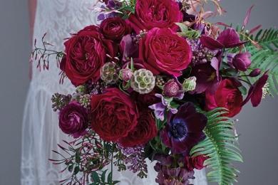 Троянда «Дарсі» (Darcey)