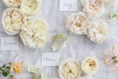 Троянди «П'юріті», «Леонора» та «Пейшнс» є одними з недавніх сортів в колекції. Дуже добре поєднуються між собою
